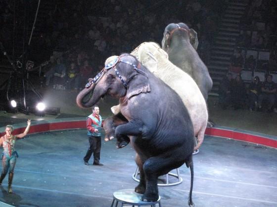 Olifanten in het circus