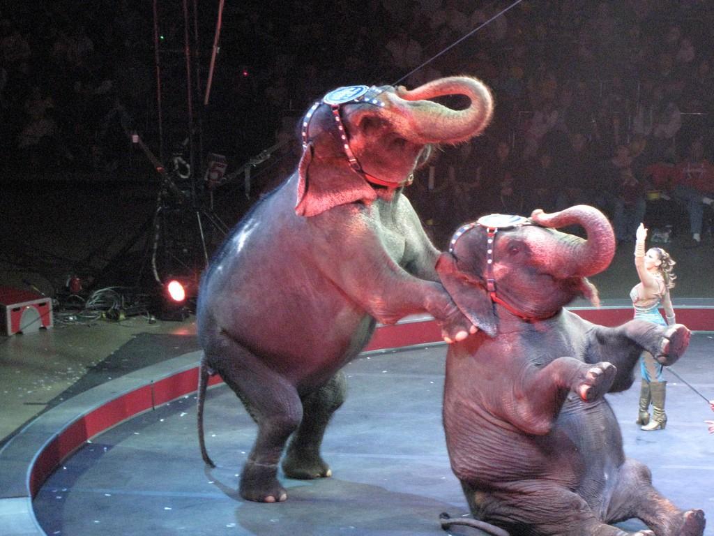 Oifanten circus