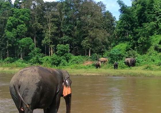 Olifanten soortgenoten - olifanten in gevangenschap