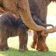 7 miljard per jaar verdiend met handel in bedreigde dieren