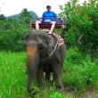 Werkolifant Samruai sterft aan de gevolgen van stress