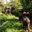 Toeristenattracties met olifanten
