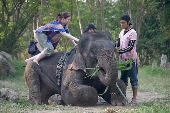 olifantenritten