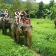 Aantal olifanten in toeristenindustrie stijgt sterk
