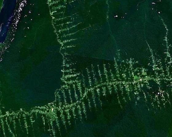 Ontbossing Brazilië