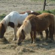 Paarden manege Oosterheem in de problemen