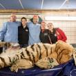 #GNvdD: Tijger Britt krijgt unieke knieoperatie