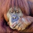 Leonardo DiCaprio op de bres voor Indonesisch regenwoud