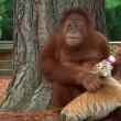 De waarheid achter 'schattig' dierenfilmpje