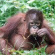 Geen weg door oerwoud Borneo dankzij David Attenborough