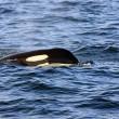 PCB's ernstige bedreiging voor walvisachtigen Europa