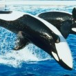 Orka Unna overleden in SeaWorld