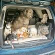 bejaarde asielhonden