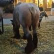 Grimmige sfeer en overtredingen op paardenmarkt Elst