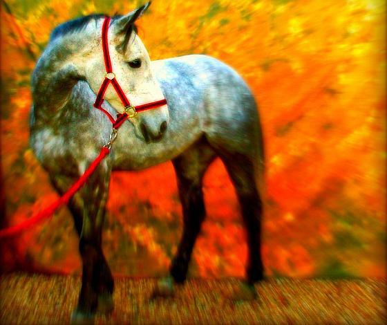 Paard art