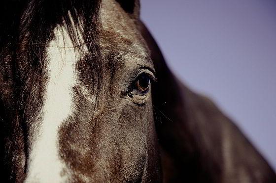 Paard ernstig verminkt