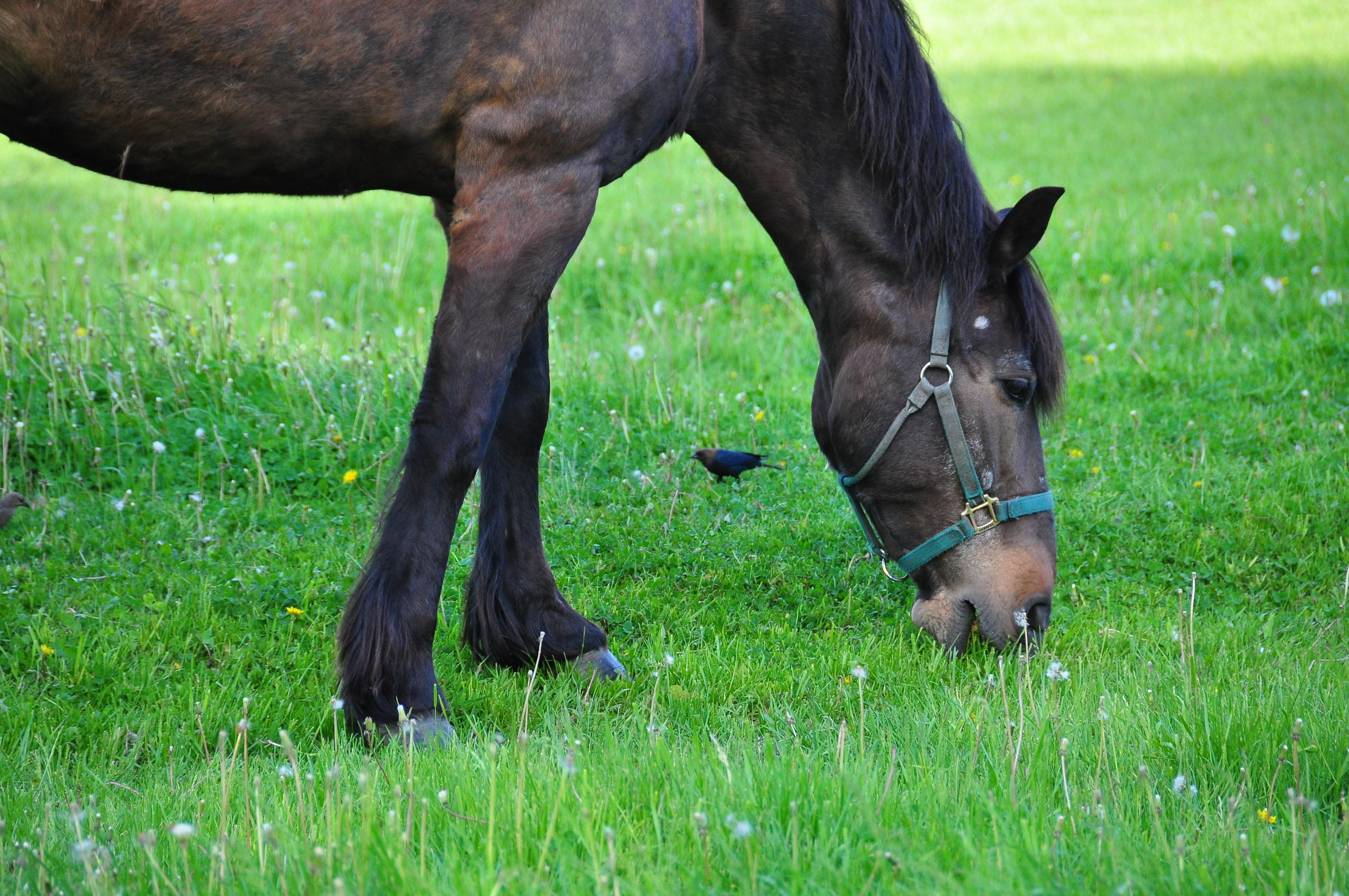 Zes paarden