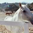 Onderzoek fraude paardenpaspoorten