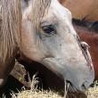 Petitieactie: Stop de gruwelijke lijdensweg van slachtpaarden voor Nederlandse consumptie