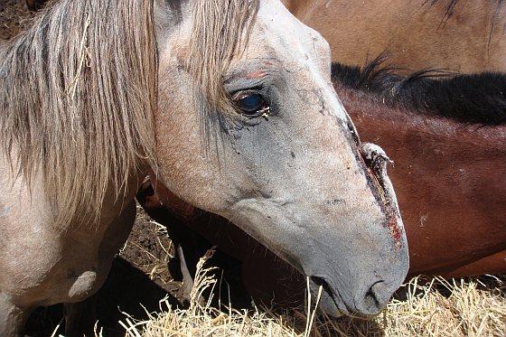 Paarden - EonA - lijdensweg