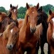 Paarden - paardensector bestialiteit