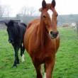 #GNvdD: Paard gered van slachthuis bevalt van gezond veulen