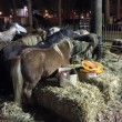 In meerdere Belgische steden geen pony's meer op kermissen toegestaan