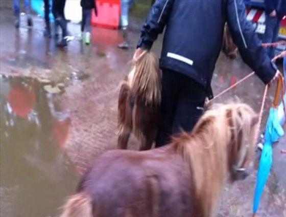 Paardenmarkten - Zuidlaren