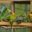 Inbeslaggenomen vogels uitgezet vrije natuur