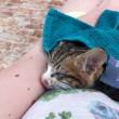 Laurens de Groot: Pief, de kitten die heel veel geluk had