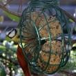 Weetjes: Tuinvogels in de winter