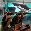 Pinguïns Japan