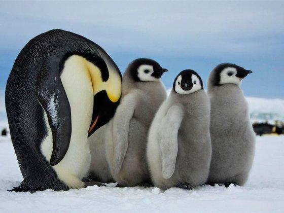 Wereld-Pinguïn-Dag - Pinguïns