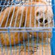 In onderbroek gesmokkelde aap leeft eenzaam bestaan in dierentuin