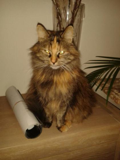 Vermiste huiskat terecht