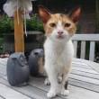 #GNvdD: Zware operatie in België voor Grieks kitten