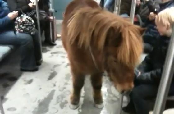 pony in metro