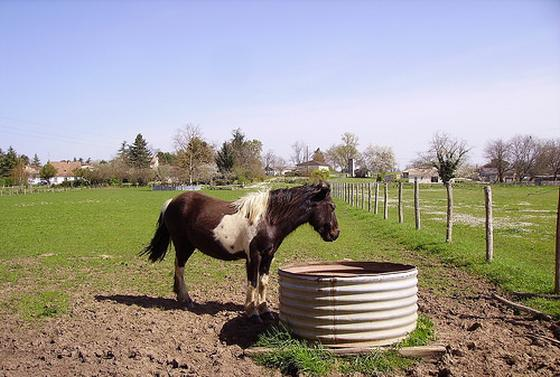 onderzoek naar paardenbeul