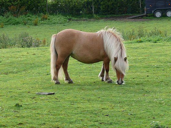 pony mishandeld