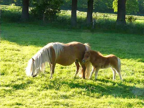 Hierden pony mishandeld