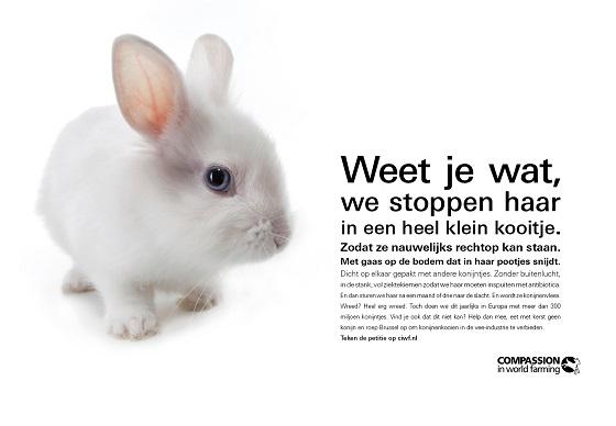 konijnenleed