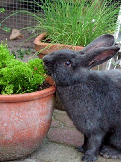 Potterie - konijnen