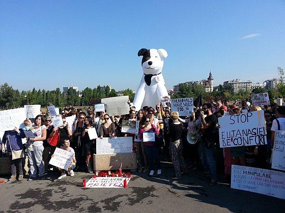 Protest Boekarest - zwerfhonden