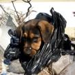 Spaanse puppy gered uit vuilniszak