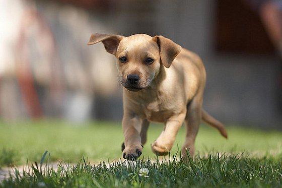 Puppy - afvoerputje