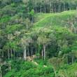 Ontbossing regenwouden zorgt voor meer CO2-uitstoot