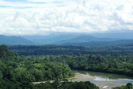 Regenwoud Ecuador
