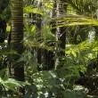 Snoei lianen kan regenwoud redden