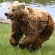 Bruine beren Mimo en Aran na jaren eindelijk gelukkig
