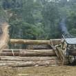 Rimbunan Hijau houtkap